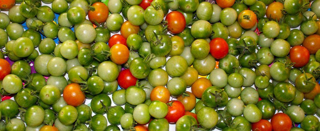 Eigenes Foto: Tomaten, 09/2017