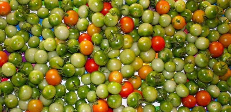 [HOME-STORY]: Grüne Tomaten