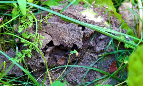 Eigenes Foto: Ameisenbau
