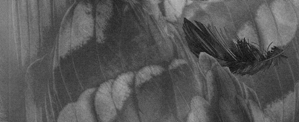 Cover: Erik R. Andara: Die Erloschenen